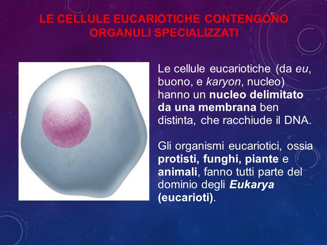 LE CELLULE EUCARIOTICHE CONTENGONO ORGANULI SPECIALIZZATI