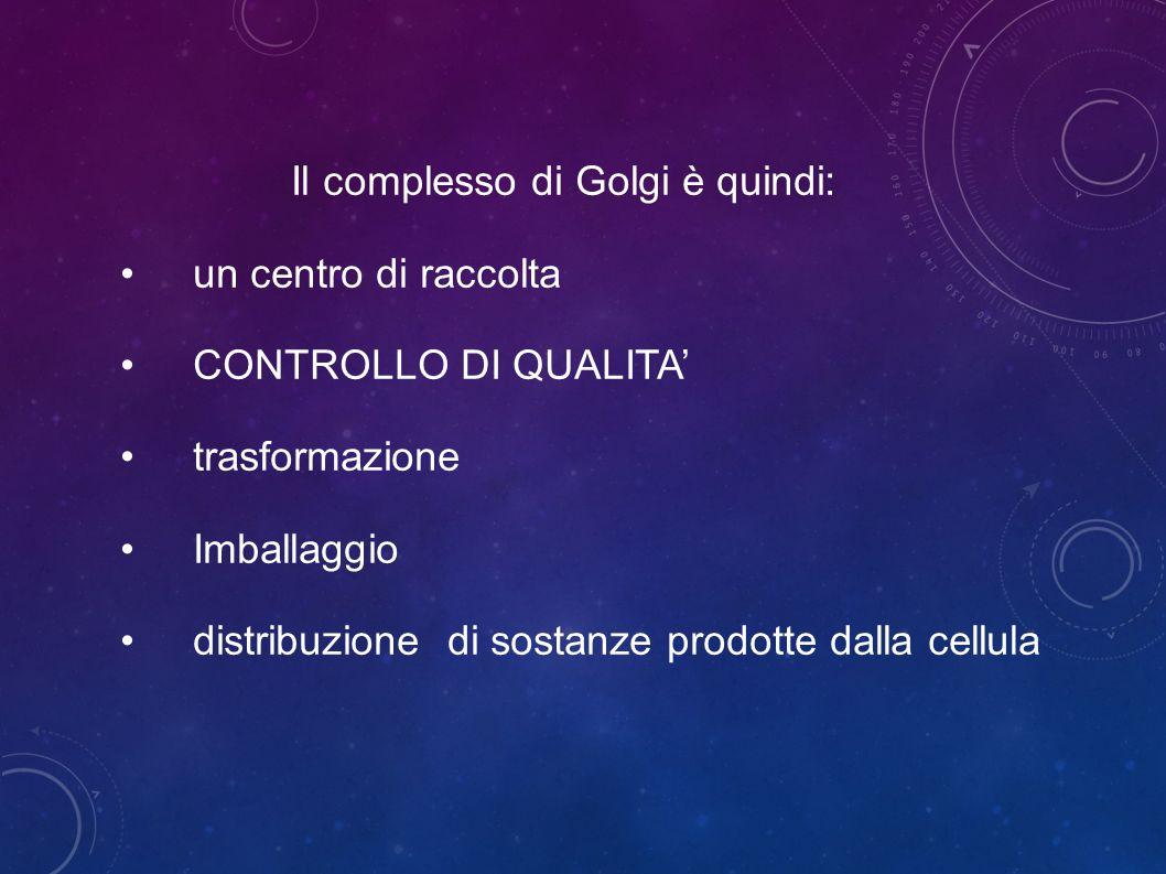 Il complesso di Golgi è quindi: