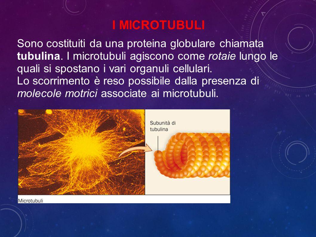I microtubuli