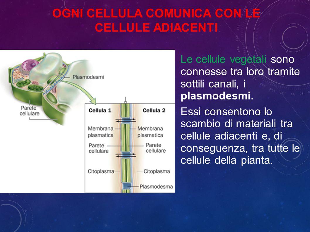 Ogni cellula comunica con le cellule adiacenti