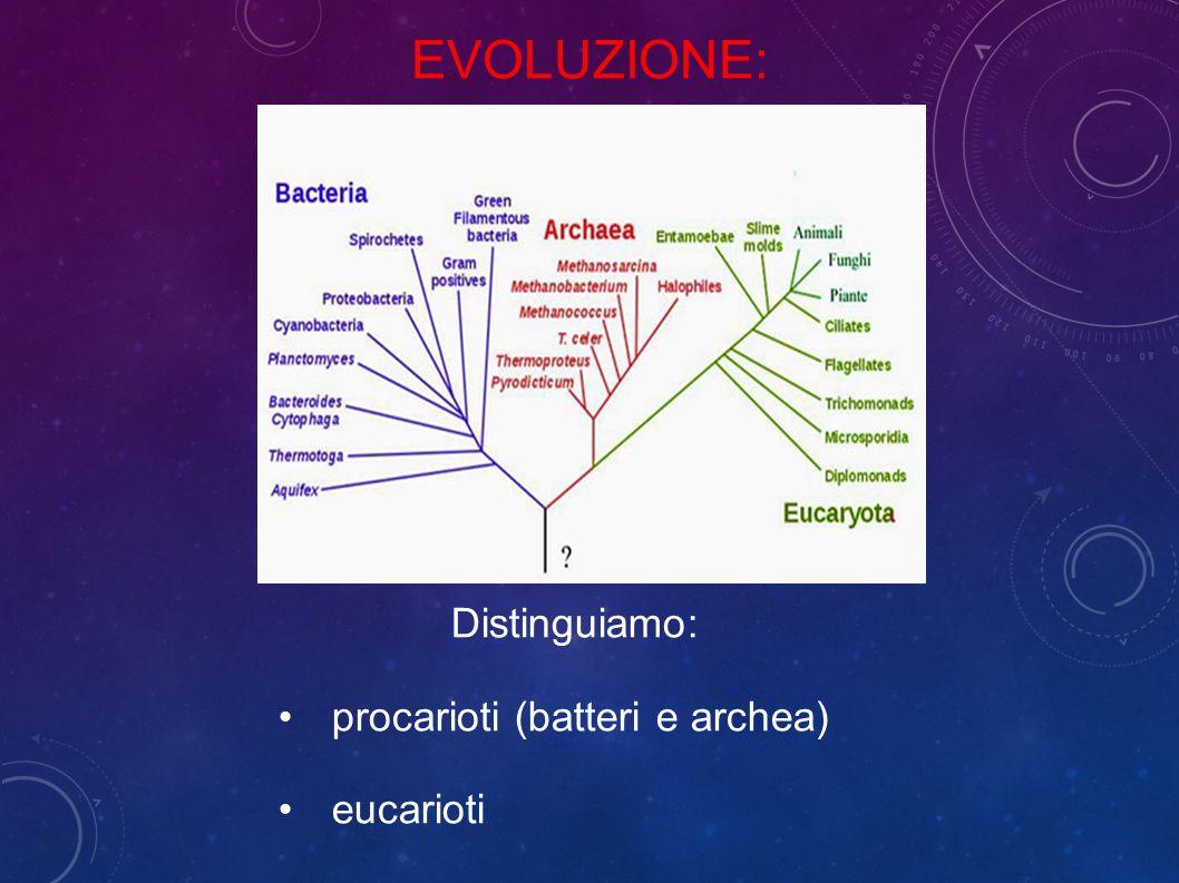 Evoluzione: Distinguiamo: procarioti (batteri e archea) eucarioti