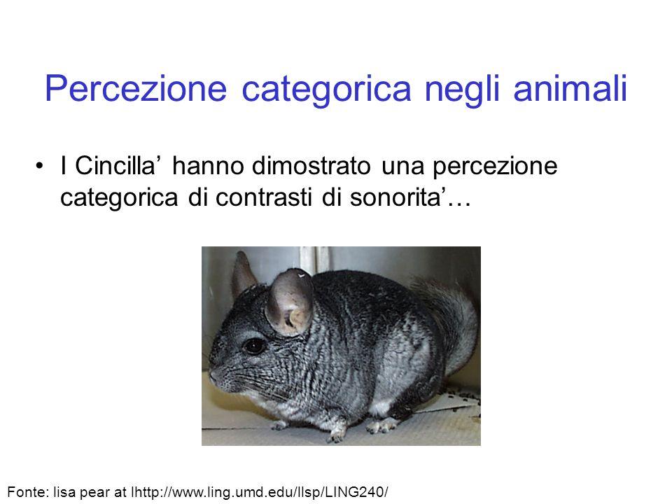 Percezione categorica negli animali