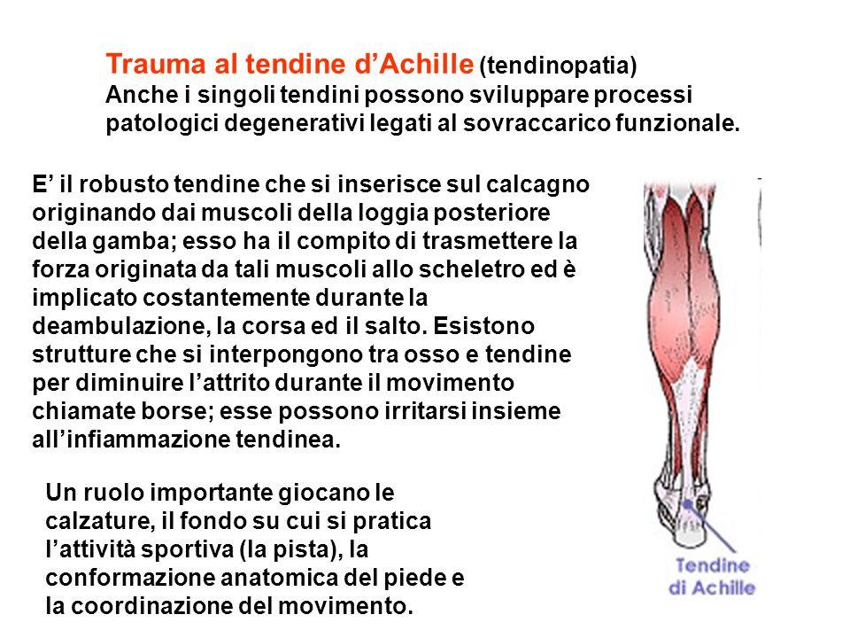 Trauma al tendine d'Achille (tendinopatia) Anche i singoli tendini possono sviluppare processi patologici degenerativi legati al sovraccarico funzionale.
