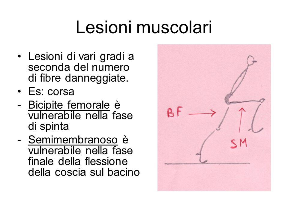 Lesioni muscolari Lesioni di vari gradi a seconda del numero di fibre danneggiate. Es: corsa. Bicipite femorale è vulnerabile nella fase di spinta.