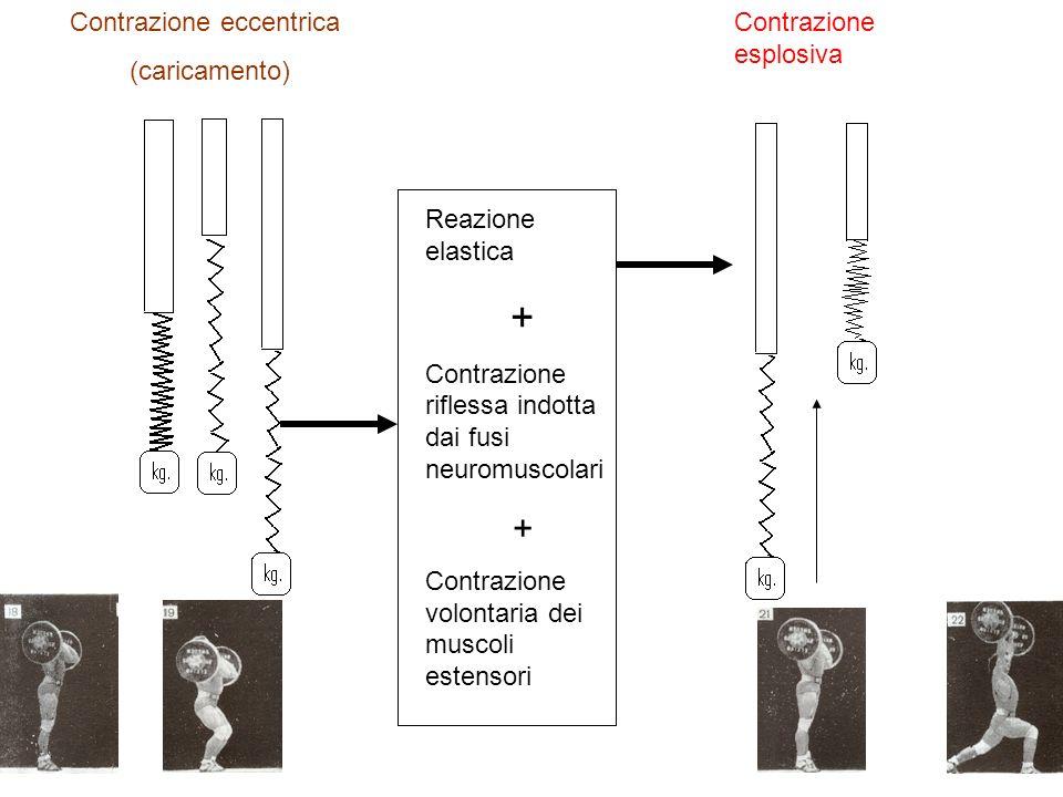 + Contrazione eccentrica (caricamento) Contrazione esplosiva