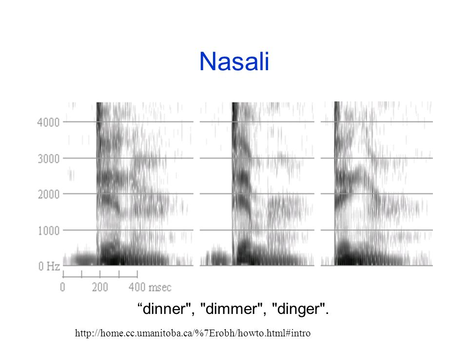 Nasali dinner , dimmer , dinger .