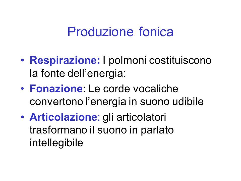 Produzione fonica Respirazione: I polmoni costituiscono la fonte dell'energia: Fonazione: Le corde vocaliche convertono l'energia in suono udibile.