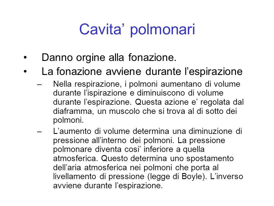 Cavita' polmonari Danno orgine alla fonazione.