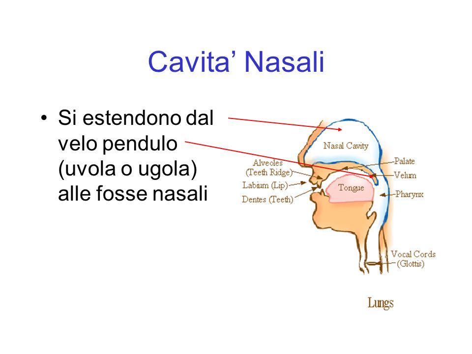 Cavita' Nasali Si estendono dal velo pendulo (uvola o ugola) alle fosse nasali