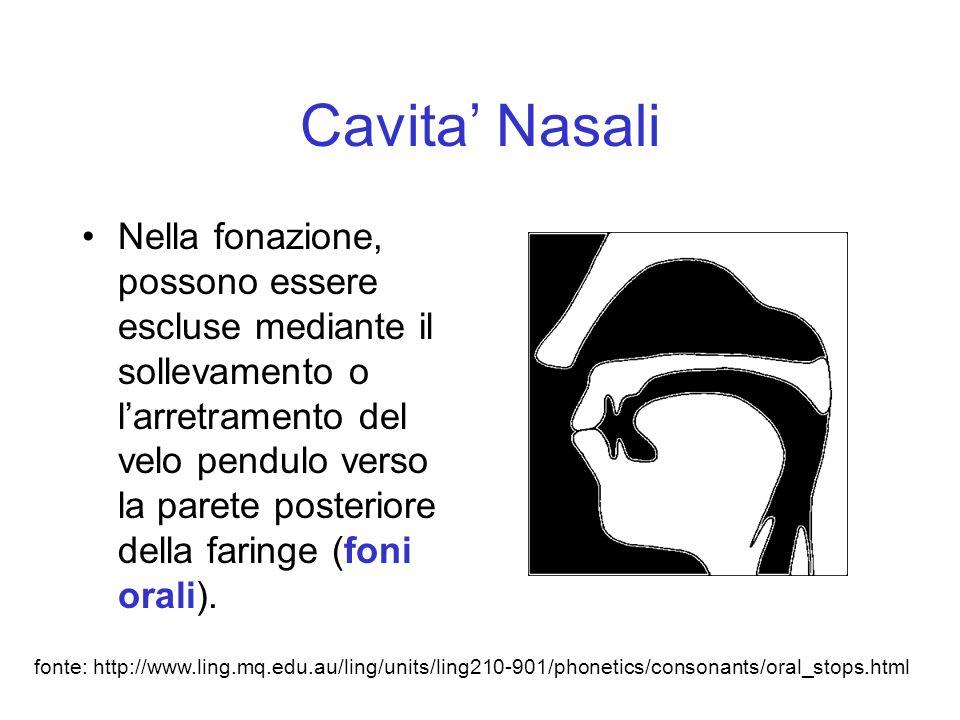 Cavita' Nasali