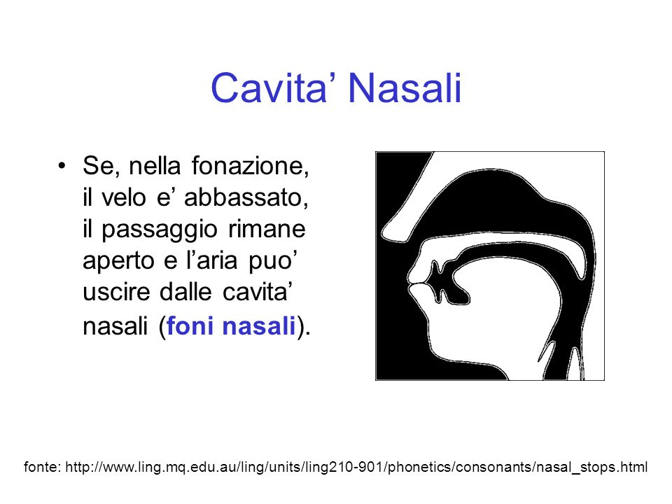 Cavita' Nasali Se, nella fonazione, il velo e' abbassato, il passaggio rimane aperto e l'aria puo' uscire dalle cavita' nasali (foni nasali).
