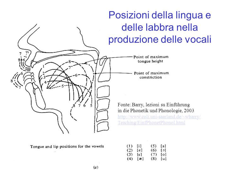 Posizioni della lingua e delle labbra nella produzione delle vocali