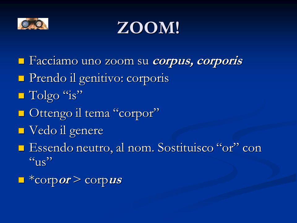 ZOOM! Facciamo uno zoom su corpus, corporis