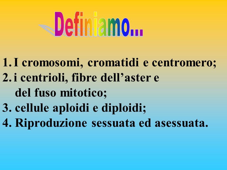 I cromosomi, cromatidi e centromero; i centrioli, fibre dell'aster e