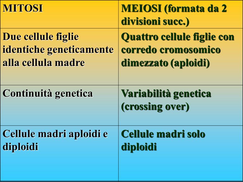 MITOSI MEIOSI (formata da 2 divisioni succ.) Due cellule figlie identiche geneticamente alla cellula madre.