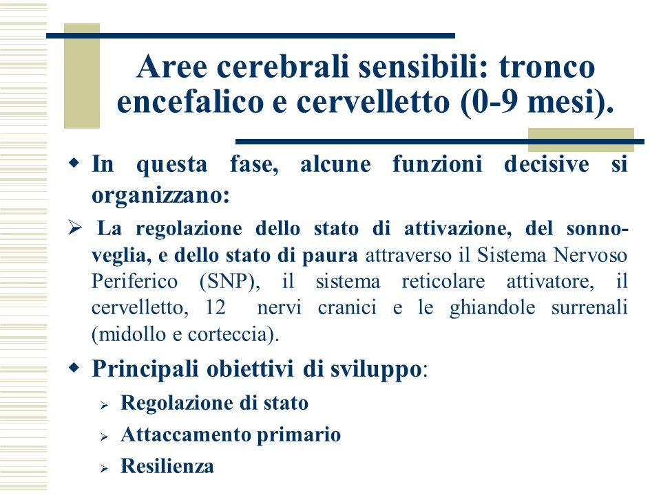 Aree cerebrali sensibili: tronco encefalico e cervelletto (0-9 mesi).