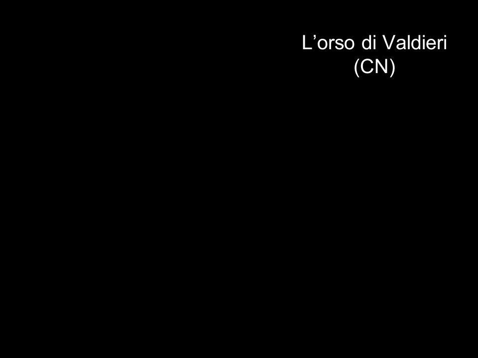 L'orso di Valdieri (CN)