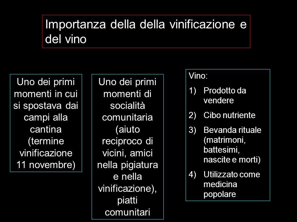Importanza della della vinificazione e del vino