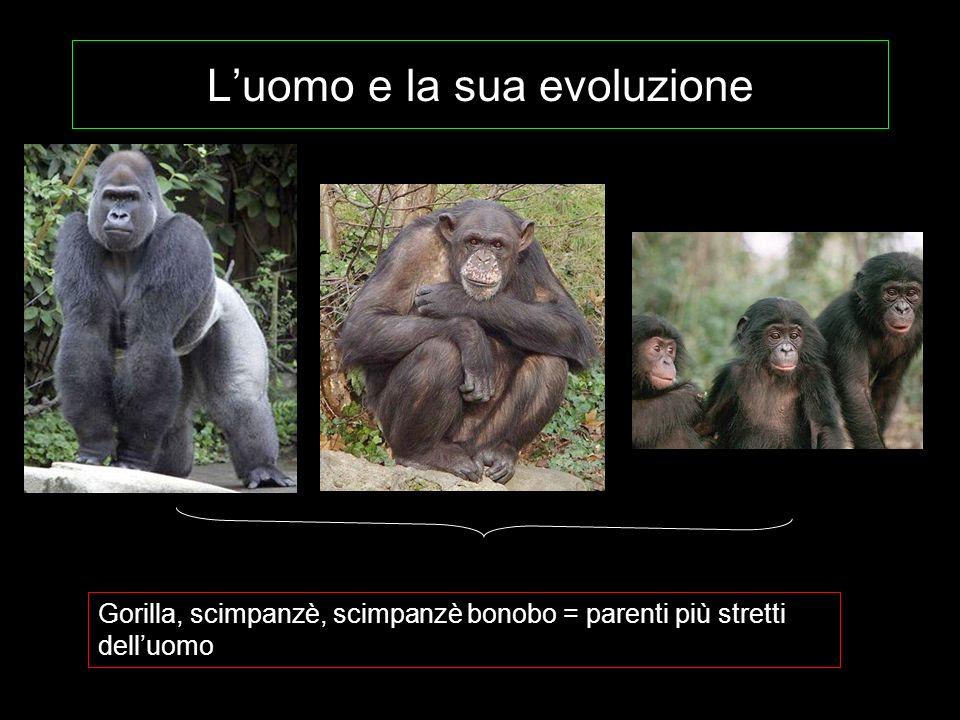 L'uomo e la sua evoluzione