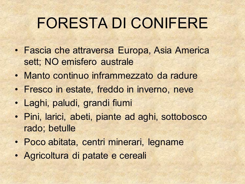 FORESTA DI CONIFEREFascia che attraversa Europa, Asia America sett; NO emisfero australe. Manto continuo inframmezzato da radure.