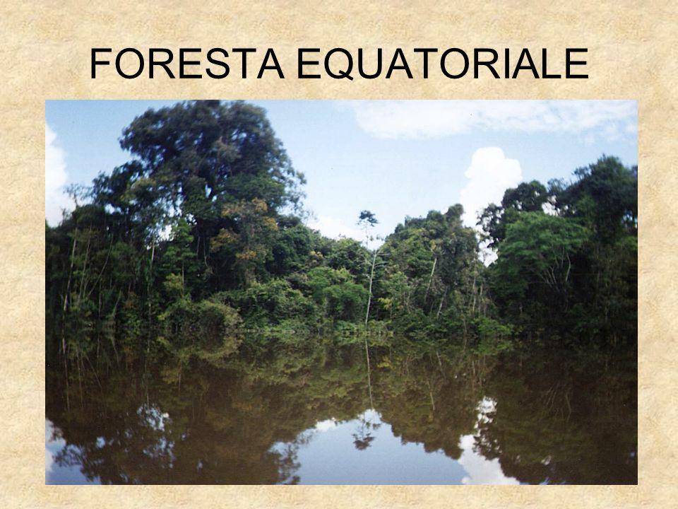 FORESTA EQUATORIALE