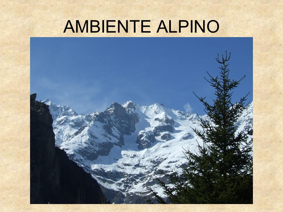AMBIENTE ALPINO