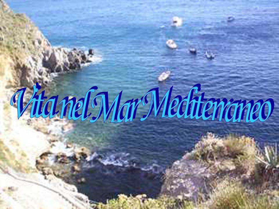 Vita nel Mar Mediterraneo