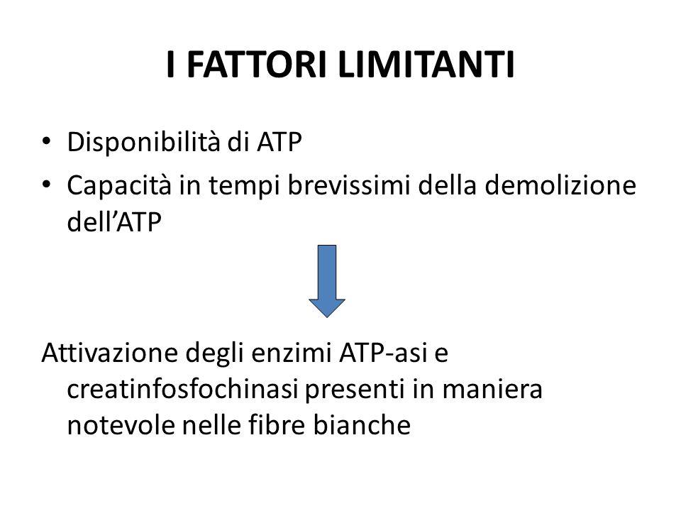 I FATTORI LIMITANTI Disponibilità di ATP