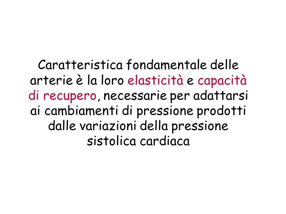Caratteristica fondamentale delle arterie è la loro elasticità e capacità di recupero, necessarie per adattarsi ai cambiamenti di pressione prodotti dalle variazioni della pressione sistolica cardiaca