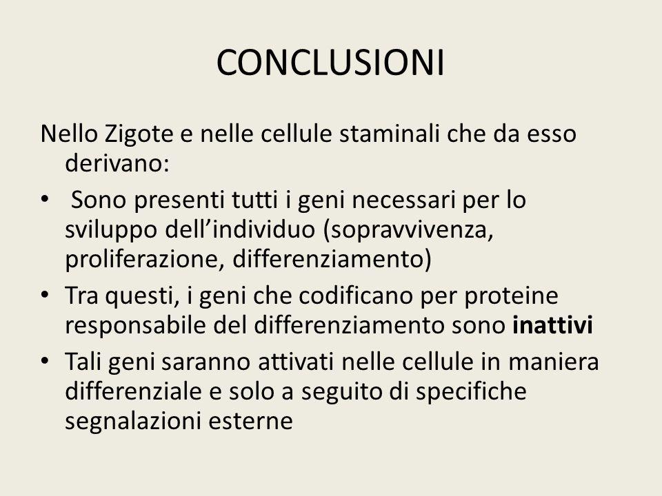 CONCLUSIONINello Zigote e nelle cellule staminali che da esso derivano: