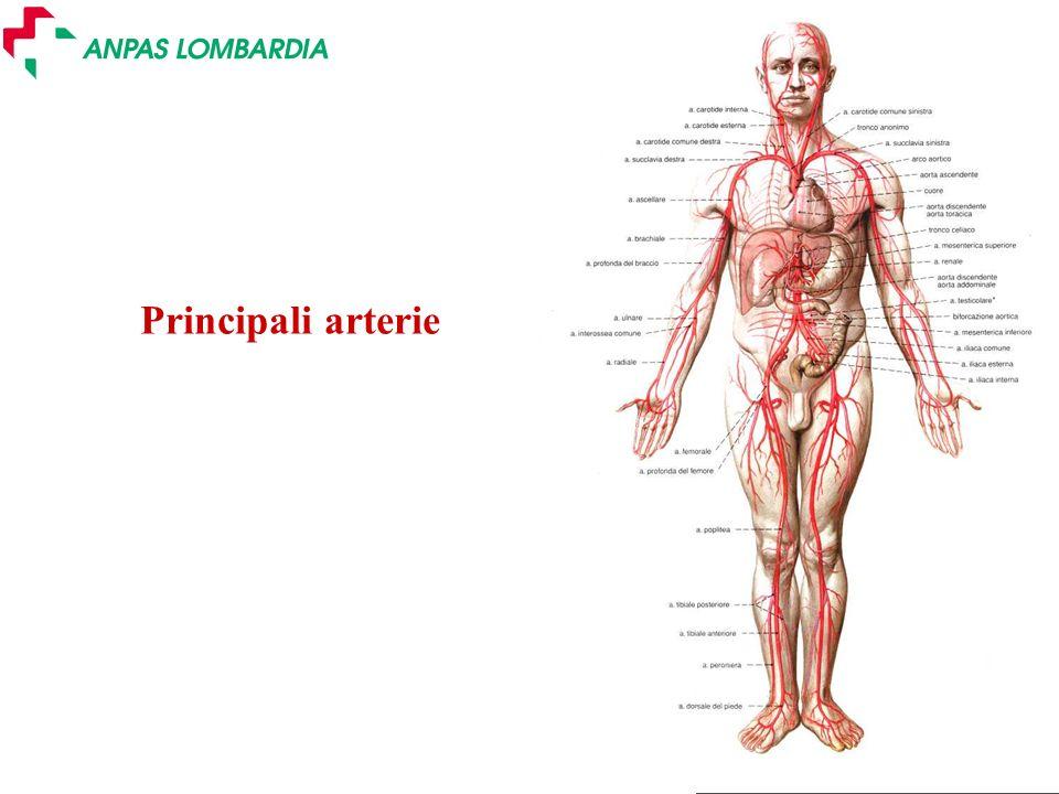 Principali arterie a