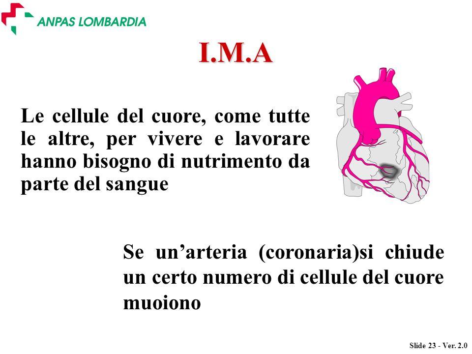 I.M.A Le cellule del cuore, come tutte le altre, per vivere e lavorare hanno bisogno di nutrimento da parte del sangue.