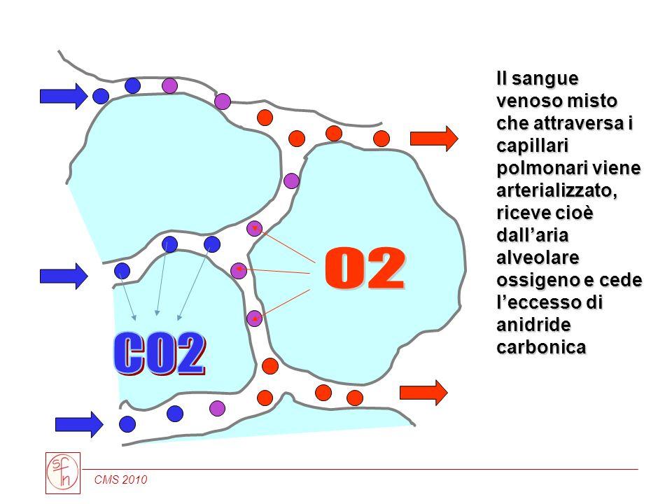 Il sangue venoso misto che attraversa i capillari polmonari viene arterializzato, riceve cioè dall'aria alveolare ossigeno e cede l'eccesso di anidride carbonica