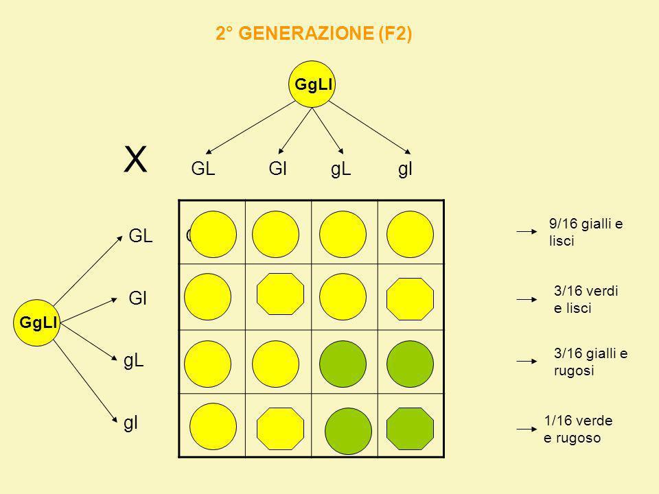 X 2° GENERAZIONE (F2) GL Gl gL gl GL GGLL GGLl GgLL GgLl GGLl GGll