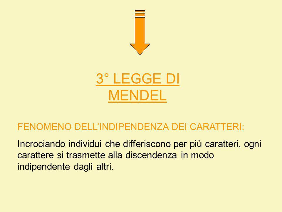 3° LEGGE DI MENDEL FENOMENO DELL'INDIPENDENZA DEI CARATTERI: