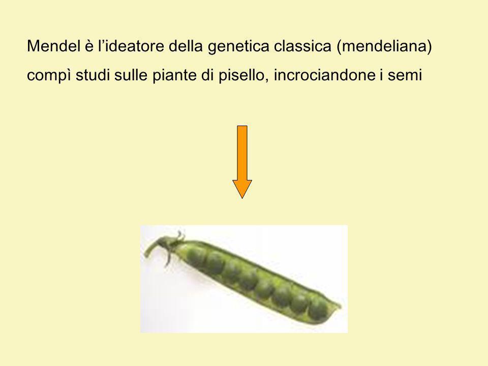 Mendel è l'ideatore della genetica classica (mendeliana)