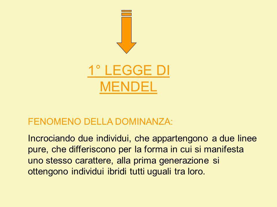 1° LEGGE DI MENDEL FENOMENO DELLA DOMINANZA: