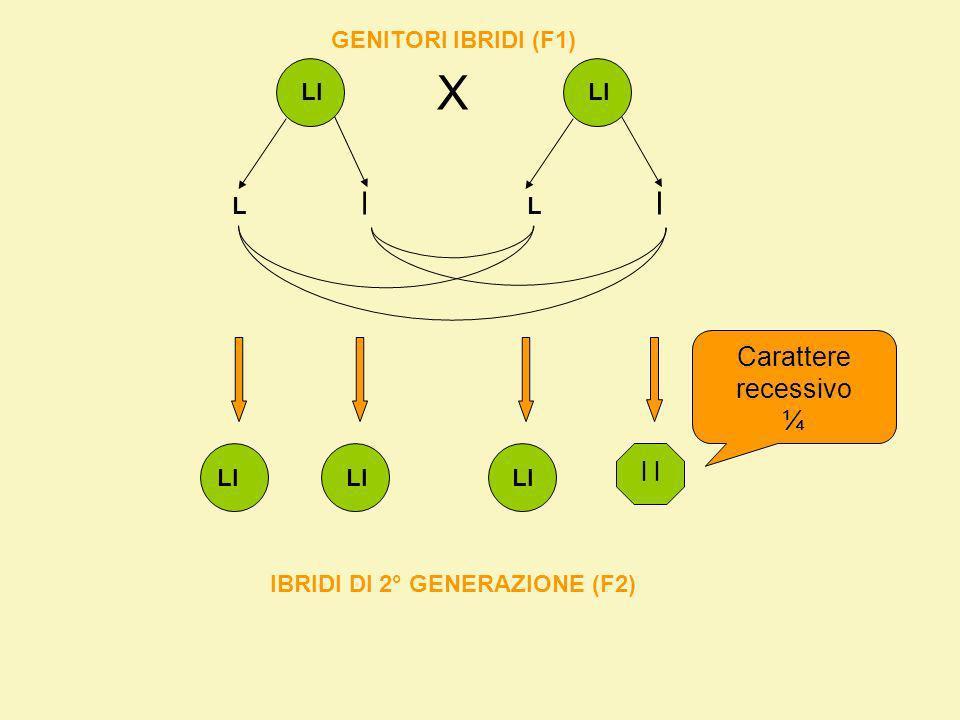 IBRIDI DI 2° GENERAZIONE (F2)