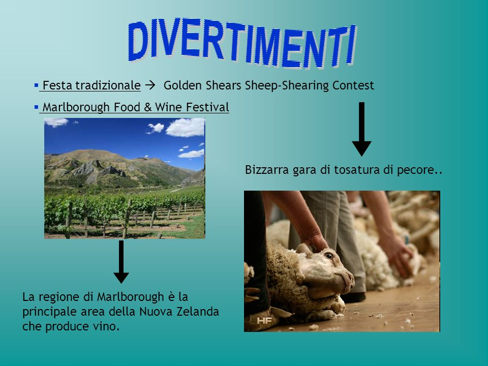 DIVERTIMENTI Festa tradizionale  Golden Shears Sheep-Shearing Contest