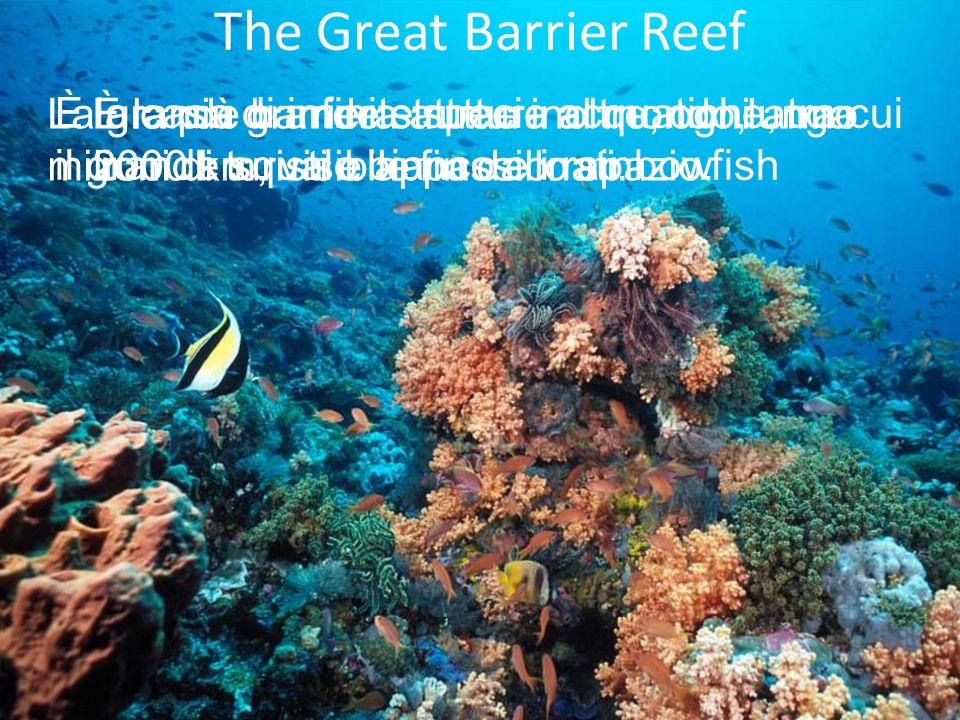 The Great Barrier Reef La grande barriera attrae inoltre, ogni anno milioni di turisti e appassionati.