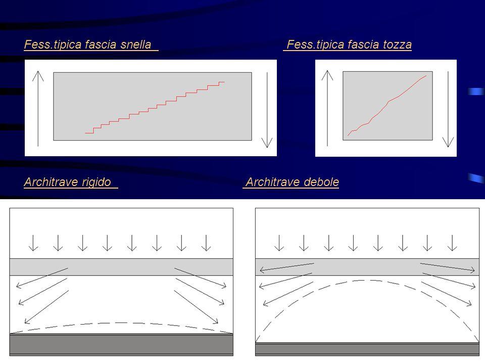 Fess.tipica fascia snella Fess.tipica fascia tozza