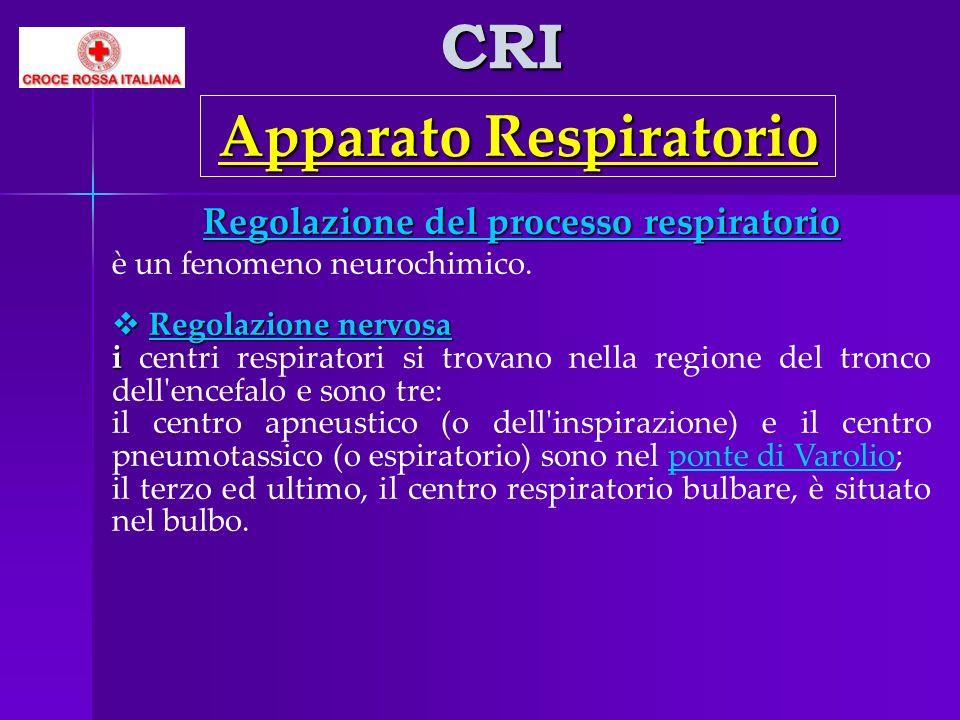 Apparato Respiratorio Regolazione del processo respiratorio