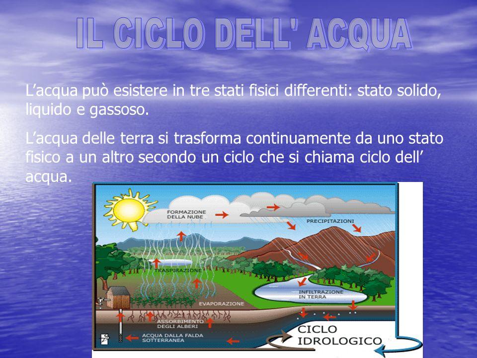 IL CICLO DELL ACQUA L'acqua può esistere in tre stati fisici differenti: stato solido, liquido e gassoso.