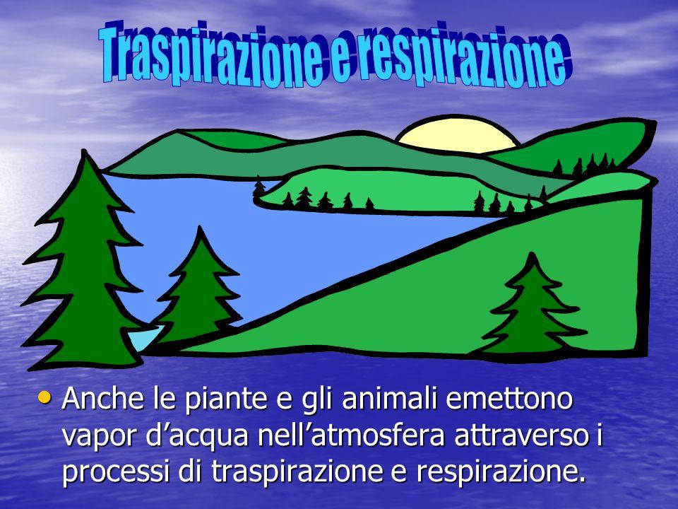 Traspirazione e respirazione