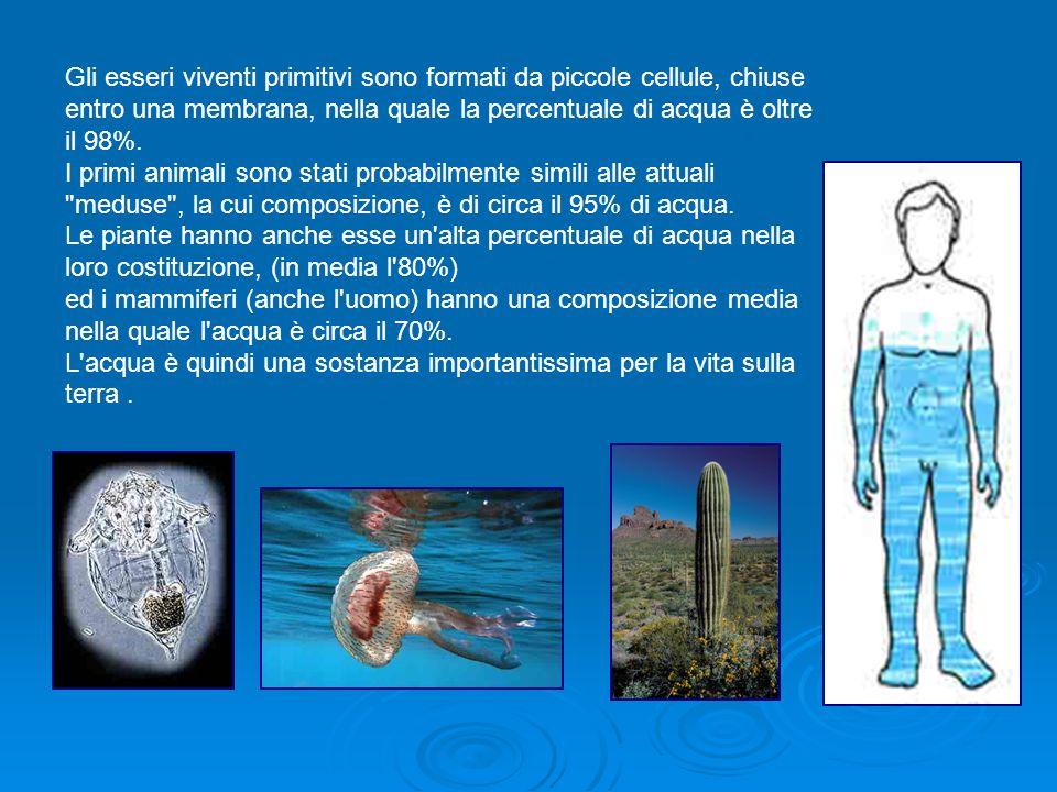 Gli esseri viventi primitivi sono formati da piccole cellule, chiuse entro una membrana, nella quale la percentuale di acqua è oltre il 98%.