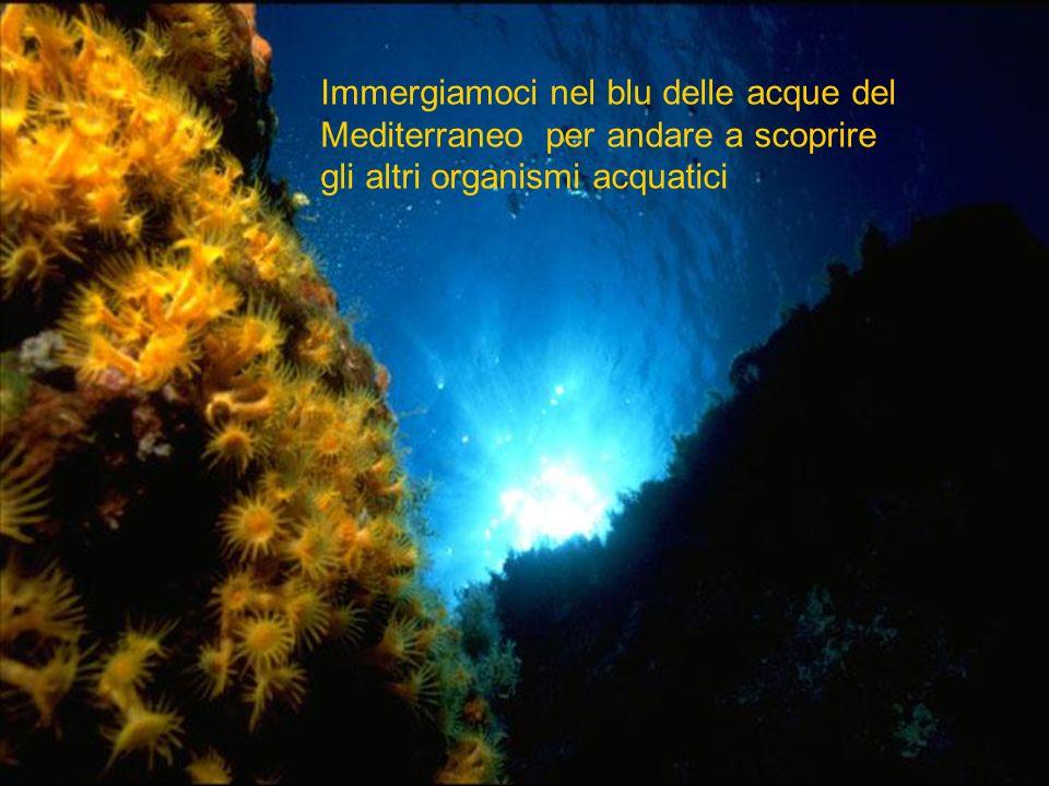 Immergiamoci nel blu delle acque del Mediterraneo per andare a scoprire
