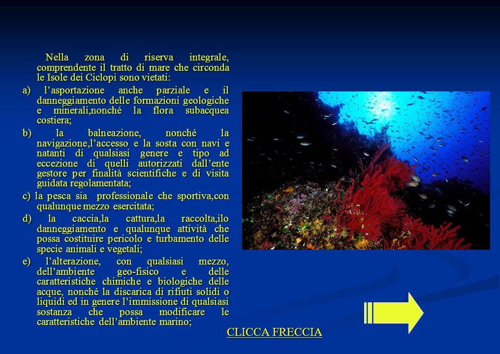 Nella zona di riserva integrale, comprendente il tratto di mare che circonda le Isole dei Ciclopi sono vietati: