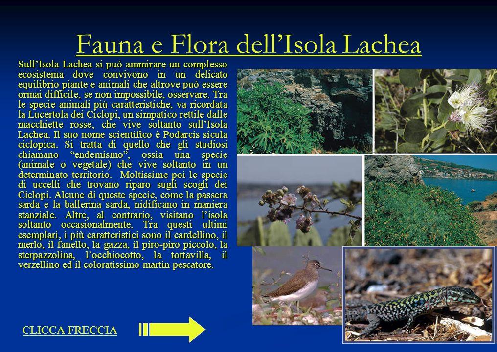 Fauna e Flora dell'Isola Lachea