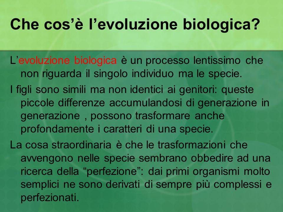Che cos'è l'evoluzione biologica