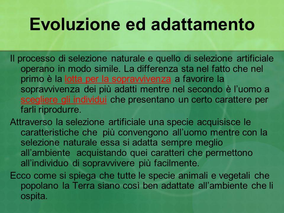 Evoluzione ed adattamento